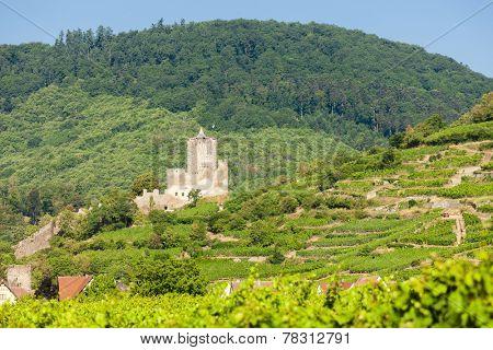 castle Kaysersberg with vineyard, Alsace, France