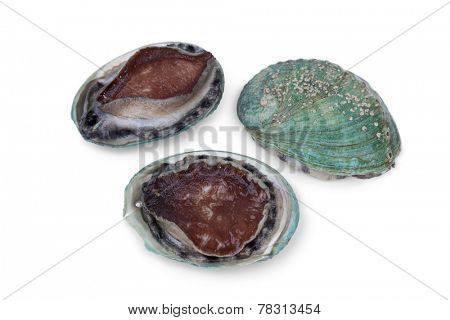 Fresh raw abalones on white background