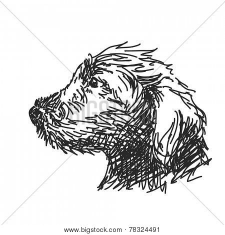 Sketch of puppy dog head Hand drawn vector illustration