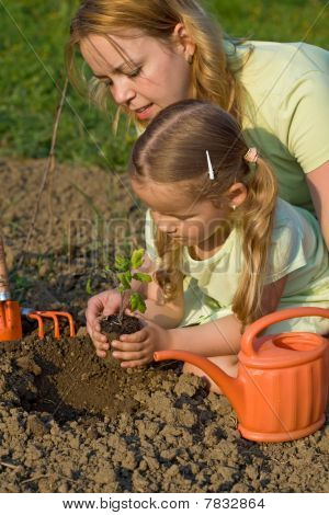 Planting A Tomato Seedling In The Garden
