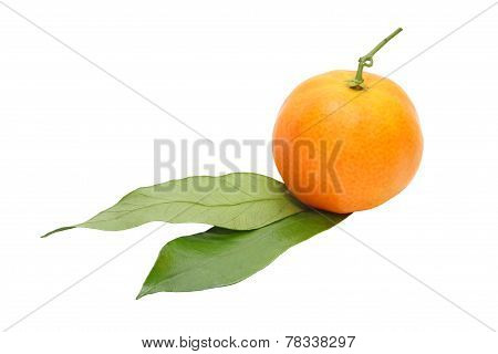 Appetizing Tangerine With Green Leafes.isolated.