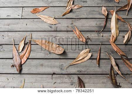Falled Dry Leaf