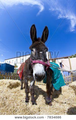Farmland And  Donkey Head Portrait