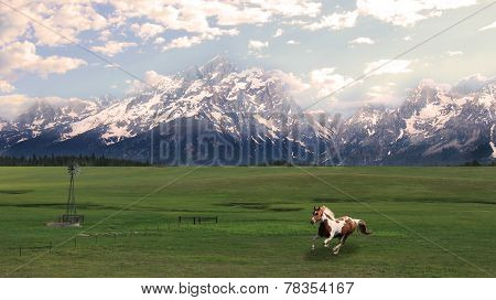 The Grand Tetons With Galloping Horse