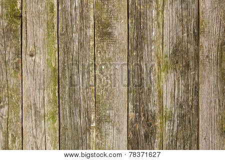 Old mossy wood texture