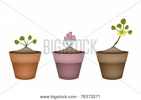 Pink and Yellow Flowers in Ceramic Pots