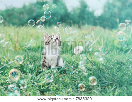 Kitten Staring At Soap Bubbles