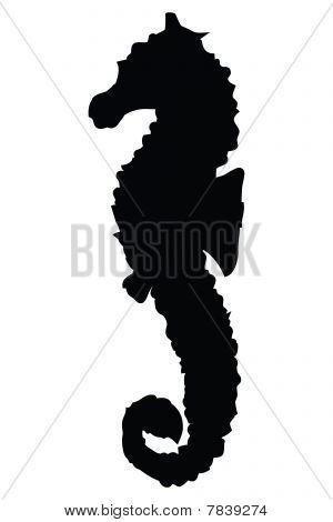 Seahorse Silhouette