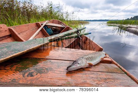 Caught Pike Lies In A Fishing Boat On The Background Of The Lake