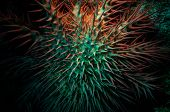 picture of echinoderms  - Poisonous crown of thorns sea star  - JPG