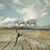 pic of surrealism  - Two zebras in a beautiful surreal landscape - JPG