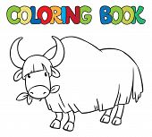 pic of yaks  - Coloring book or coloring picture of funny grazing wild yak - JPG