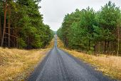 pic of coniferous forest  - Pine forest and road  - JPG