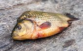 stock photo of freshwater fish  - Raw freshwater fish carp on a wooden board - JPG