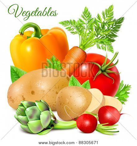 Ripe fresh vegetables. vector illustrations.