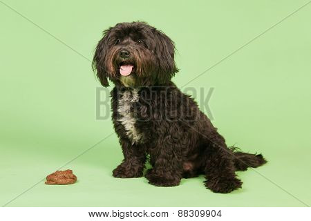Dog with smelling stool in studio