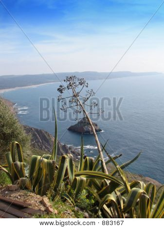 Agave Over The Sea