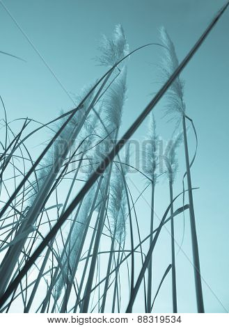 Vintage style image of pampas grass.