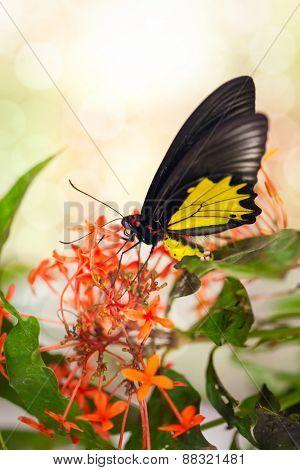 Butterfly on red flower, feeding