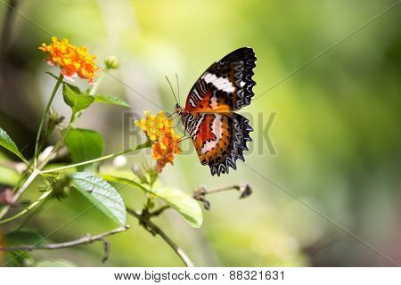 Amazing butterfly with red and black spots