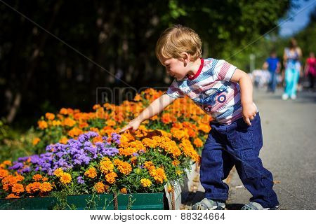Boy Collecting Flowers