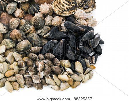 Shellfish assortment