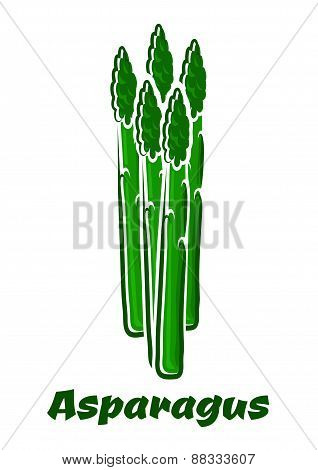 Green asparagus vegetable spears on white background