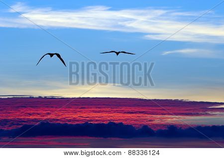 Birds Flying Above The Clouds Silhouette