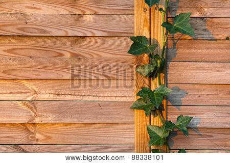 wooden fence closeup photo