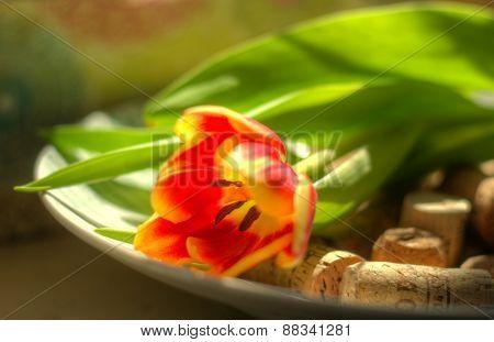 Tulip in bowl