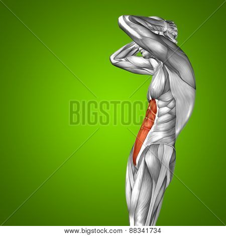 Concept or conceptual 3D chest human anatomy or anatomical and muscle on green gradient background