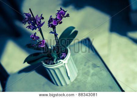 Purple flower pot