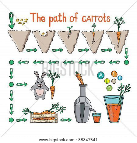 The Path Of Carrot