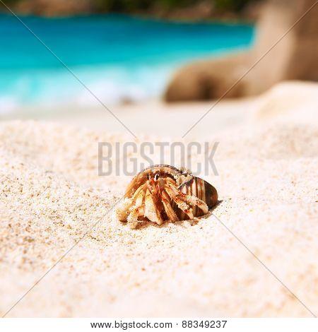 Hermit crab on beach at Seychelles