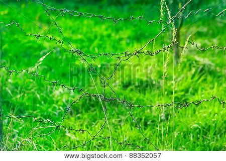 The Barbed Wire Fence On The Background Of Green Grass