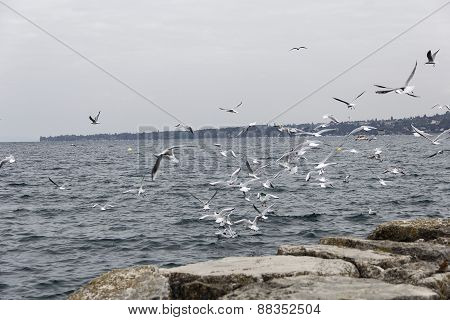Seagulls Fly Over The Water