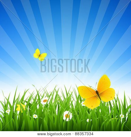 Nature Background With Grass And Flowers