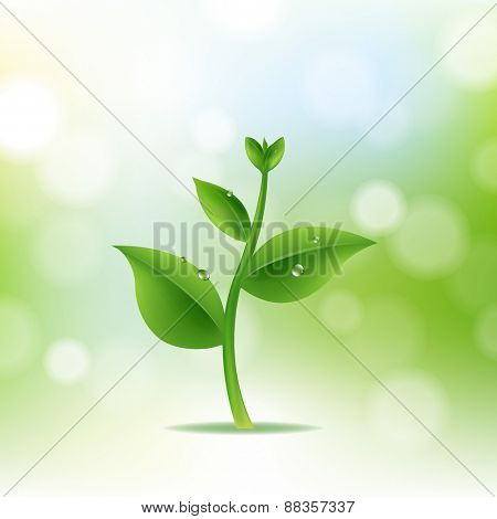Nature Background With Plant And Drop Water