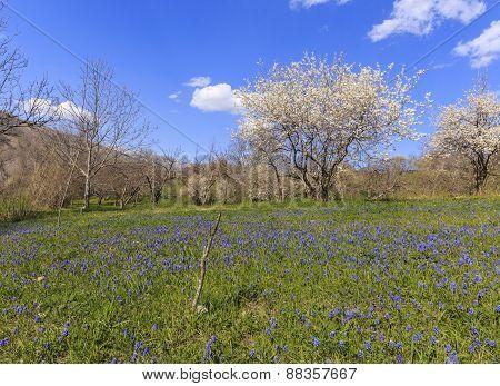 Spring In The Mountains Near The Village Of Lahij Azerbaijan
