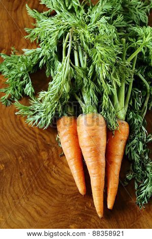 ripe organic carrots with green leaves on the ground on a wooden background