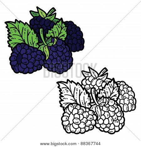 Blackberries coloring book