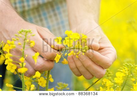 Farmer Standing In Oilseed Rapeseed Cultivated Agricultural Field