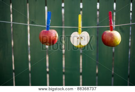 Apples Hanging On The Rope To Dry