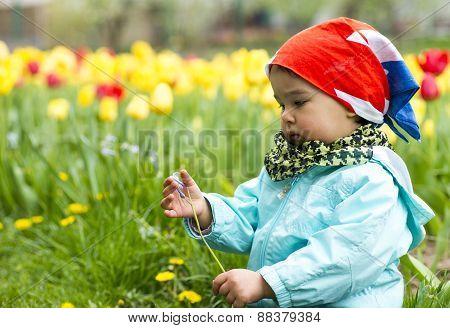 Adorable Toddler Girl Gathering Flowers