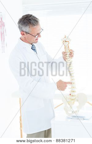 Doctor showing anatomical spine in clinic