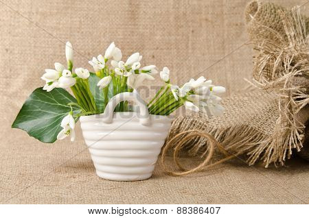 Snowdrop In Porcelain Basket On Sacking Background
