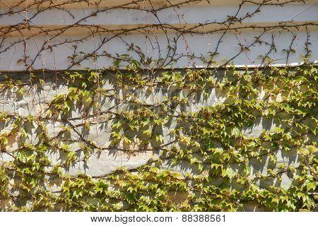 young foliage - 4