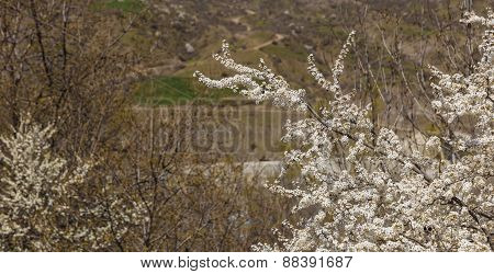 Blooming Spring Buds On A Tree