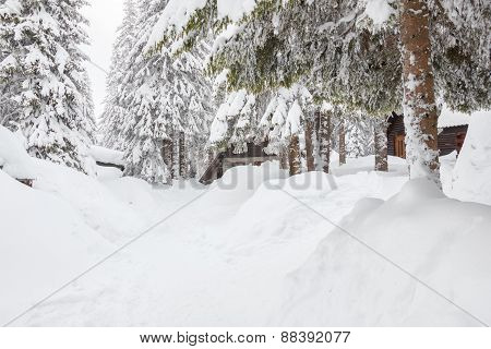 Forest With Conifers Covered In Snow And Winter Road
