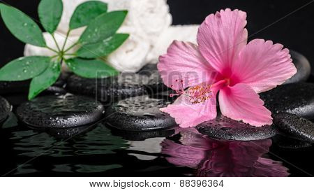 Still Life Of Pink Hibiscus Flower, Green Leaf Shefler With Drops And White Towels On Zen Stones In